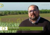 VÍDEO: Aloe Vera en Andalucía