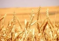 Los precios de los cereales siguen subiendo