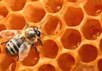 Publicadas las bases para la concesión de ayudas a la investigación en apicultura