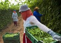 Anulado el acuerdo comercial de productos agrícolas y pesqueros entre la UE y Marruecos