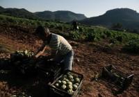 Se convocan ayudas a inversiones materiales o inmateriales en transformación, comercialización y desarrollo de productos agrarios