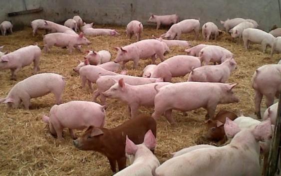 COAG propone en Bruselas que todos los países de la UE eleven su estándar de bioseguridad en granjas al nivel de España