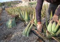La Diputación de Jaén concede ayudas a 60 agricultores para financiar cultivos alternativos al olivar