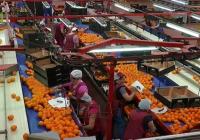 VÍDEO: Balance del sector agrícola, ganadero y agroalimentario de Andalucía en 2015