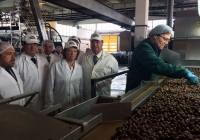 La Consejera de Agricultura destaca la constante innovación del sector de la aceituna de mesa