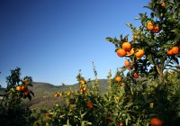 Se abre la convocatoria de 2016 de ayudas para las organizaciones de productores hortofrutícolas de Andalucía