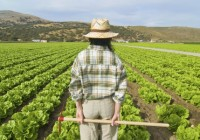 La Junta de Andalucía amplía a 90 millones las ayudas para la incorporación de jóvenes agricultores
