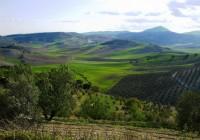 La Denominación de Origen Sierra Mágina aumenta sus marcas inscritas