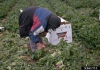 Campaña divulgativa de Coag sobre buenas prácticas laborales en el sector agrario