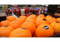 El Ministerio solicitará a la UE un incremento de las ayudas a la retirada de frutas y hortalizas
