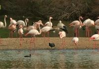 VÍDEO Suelta de aves en La Cañada de Los Pájaros. ¡Feliz día de los humedales!