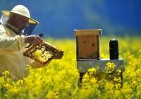COAG Andalucía celebra sus asambleas del sector apícola en las ocho provincias