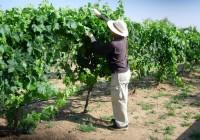 Andalucía se alía con otras diez regiones europeas para defender una PAC fuerte que impulse el desarrollo rural