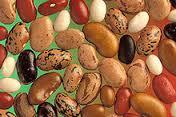 Red de Semillas y Coag reclaman políticas que garanticen los derechos  de los agricultores a vender e intercambiar sus semillas