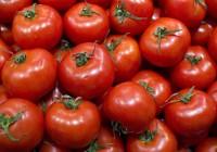 Las organizaciones reclaman medidas para evitar el colapso del mercado comunitario de tomate
