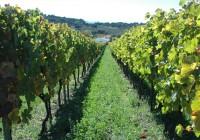 La Consejería hace público el listado de adjudicatarios de viñedos para 2016