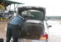 La Guardia Civil recupera 204.500 kilos de aceituna de los 615.500 kilos robados