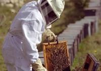 UPA reclama más apoyo para la apicultura profesional
