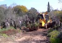 Andalucía se suma a pedir ayudas para el arranque de olivos como sucede en Extremadura