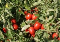 Más de 81 millones en ayudas a productores de frutas y hortalizas para 2016