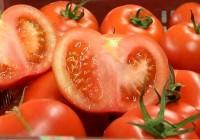 VÍDEO ¿Qué derechos tienen los agricultores sobre sus semillas?