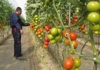 Las exportaciones hortofrutícolas de Almería aumentan un 6,3% en el primer trimestre y superan las 906.000 toneladas