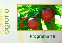 VIDEO. Recolección de la fruta de hueso en Los Palacios