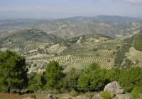 Coag Andalucía critica la falta de sensibilidad de Hacienda hacia los sectores agrarios