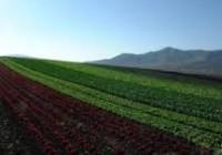 El Ministerio de Agricultura prorroga el plazo para presentar la solicitud única de ayudas de la PAC 2016