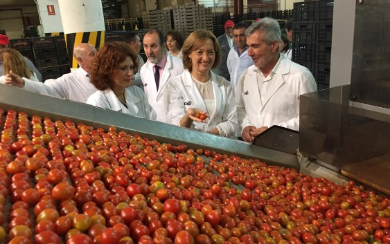 Almería concentra casi el 89% de las exportaciones de tomate de Andalucía