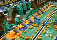 Asaja Córdoba pide que los módulos de IRPF para olivar y cítricos compensen la crisis de precios