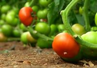 VÍDEO Balance de la campaña hortofrutícola en Almería