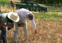 VÍDEO Proyecto INSPIA: Agricultura de conservación en Alcalá de Guadaíra