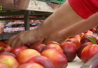 VÍDEO La campaña de melocotón en Tocina y Los Rosales