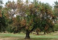Nuevo listado de zonas demarcadas de Xylella fastidiosa