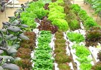 VÍDEO Variedades de hortalizas en Almería