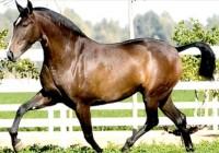 El registro oficial de caballos de Pura Raza Española supera los 220.000 ejemplares