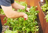 Publicado el III Plan Andaluz de Agricultura Ecológica Horizonte 2020