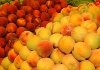 El Ministerio de Agricultura abre un cupo para transformar en zumo melocotones, nectarinas y paraguayos retirados del mercado