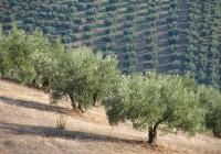 La Consejería  solicita     una   ayuda   asociada   al   olivar   en pendiente, uva pasa y trigo duro