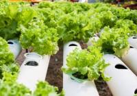 La Estrategia de Gestión de Restos Vegetales en la Horticultura supondrá un paso cualitativo del sector hacia la bioeconomía