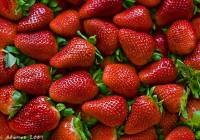Las exportaciones de frutos rojos desde septiembre de 2015 a mayo de 2016 superan los 905 millones de euros