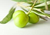 COAG Andalucía denuncia un importante incremento  de importaciones de aceituna similar a la manzanilla