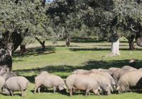 Presente y futuro para la ganadería y su industria asociada en Huelva, a debate en Jabugo