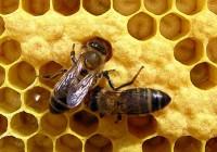 El sector apícola, preocupado por la parálisis del mercado de miel