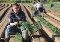 COAG alerta a los europarlamentarios españoles del grave impacto que tendría la suspensión de los fondos UE para las zonas rurales