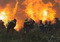 COAG Andalucía valora de forma positiva la convocatoria de ayudas a la prevención de incendios forestales