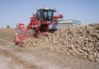Andalucía cierra su campaña remolachera con una producción de 600.632 toneladas