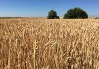 La superficie asegurada en Andalucía en el Plan 2015 fue de casi 900.000 hectáreas, un 24% más respecto al año anterior
