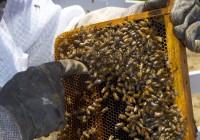 La reducción de un 40% en la cosecha de miel no está sirviendo para reactivar los precios